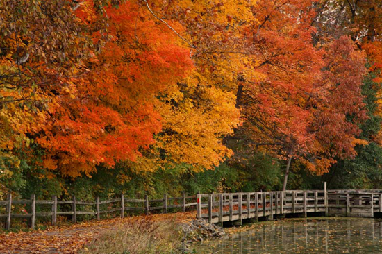fall landscape photos 20 x30 fall landscape wood prints