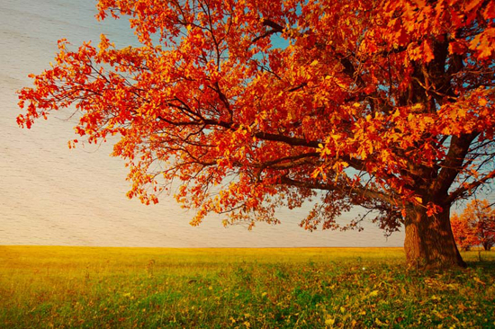 20 x30 fall landscape wood prints